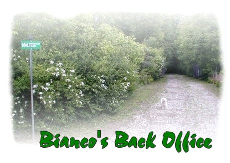 Bianco's Back Office - Maltese Lane